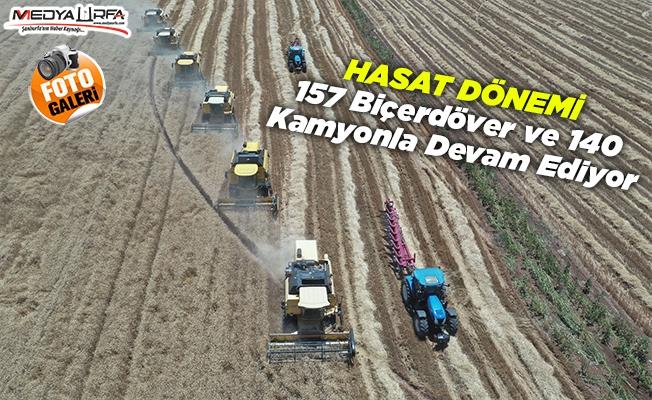 Ceylanpınar Tarım İşletmesi'nde hasat ve ekim bir arada