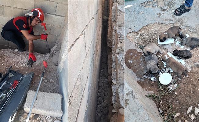 İki duvar arasına sıkışan köpek yavruları kurtarıldı