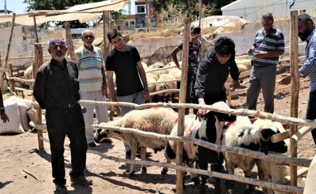 Şanlıurfa'da hayvan pazarlarında hareketlilik