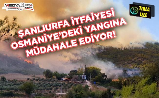 Şanlıurfa İtfaiyesi Osmaniye yangınına müdahale ediyor