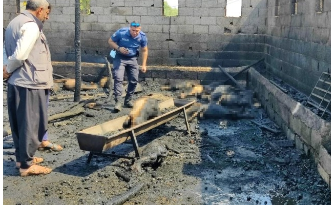 Şanlıurfa'da ahırda çıkan yangında 25 küçükbaş hayvan telef oldu