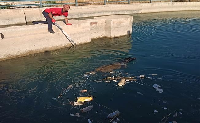 Şanlıurfa'da sulama kanalında düşen köpek kurtarıldı