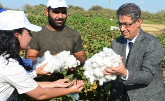 GAP'ta pamuk üretim maliyetleri azaldı