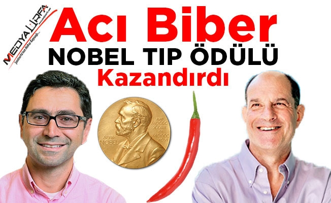 Yedikleri Acı Biber Nobel Tıp Ödülü Kazandırdı