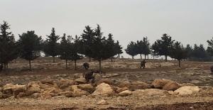Eyyübiye#039;de Polise Hain Saldırı