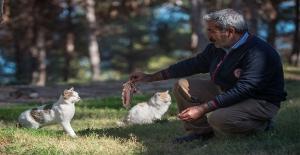 Sokak Kedilerini Evlat Sevgisiyle Besliyor