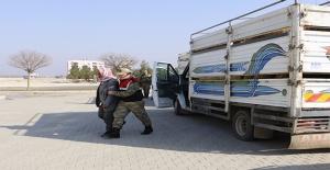 Akçakale'de Hayvan Kaçakçılığı Operasyonu