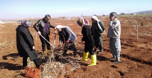 Tarım Danışmanları Şanlıurfa'da Çiftçileri Bilgilendiriyor