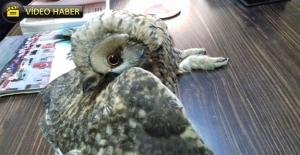 Urfa'da Ağaçta Mahsur Kalan Baykuş'u İtfaiye Kurtardı