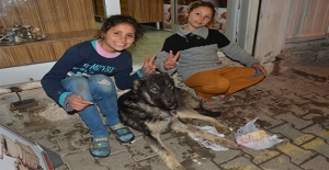 Şanlıurfa'da Suriyeli Kardeşler Hasta Köpeğe Sahip Çıktı