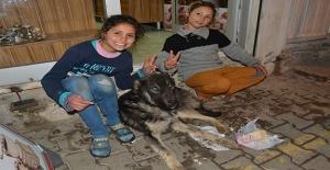 Şanlıurfa'da Suriyeli Kardeşler Hasta Köpeğe Sahip Çıktı
