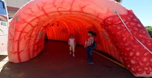 Kolon Kanseri Şanlıurfa'da Dev Maketle Tanıtıldı
