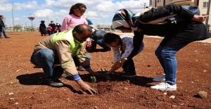 Öğrencilerin Diktikleri Fidanlar Parkı Yeşillendirdi