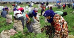 Tarım İşçi Ücretleri ile Biçerdöver Biçim Fiyatları Belirlendi