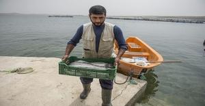 Şanlıurfa'da Bozkırdan Deniz Kentlerine Balık Satıyorlar