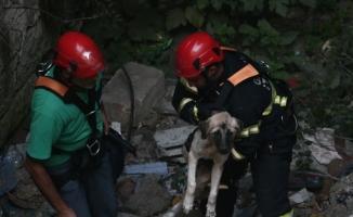 Boynuna kemer bağlanıp mağaraya atılan köpek kurtarıldı