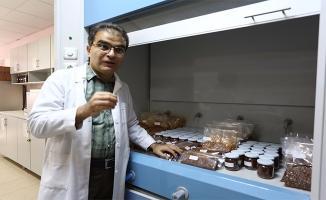 Harran Üniversitesi İsotun röntgenini çekti