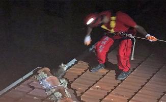 Çatıda 3 gün mahsur kalan kedi kurtarıldı