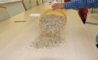 Sezonun ilk arpa hasadı Şanlıurfa'da yapıldı