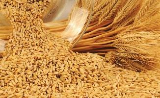 Urfa'da arpa 0,67 liradan satıldı