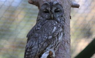 Urfa'da tedavi edilen sansar ve baykuş doğaya bırakıldı