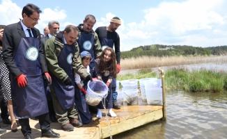 Abant Gölü'ne 100 bin Abant alası bırakıldı
