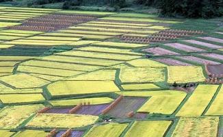 Hazineye ait ne kadar arazi çiftçilere kiralandı ?