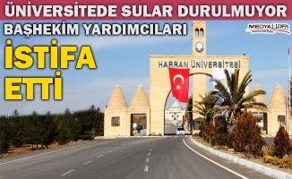 Harran Üniversitesi'nde istifa depremi!