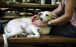 'Hayvanlara işkence adli yaptırım kapsamına alınacak'