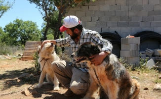 """""""Gönüllü Hayvan Dostları"""" projesiyle sahipsiz köpek kalmayacak"""