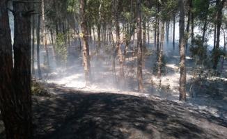 Mersin'de örtü yangını