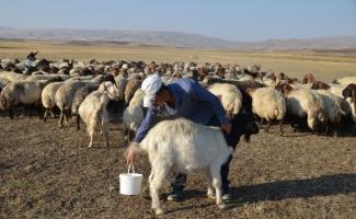 """Süt üreticilerinden fiyatlar için """"parite"""" talebi"""