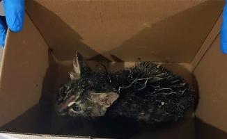 Kanalizasyon boşluğuna düşen kedi kurtarıldı