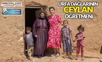 """Urfa dağlarının """"Ceylan"""" öğretmeni"""