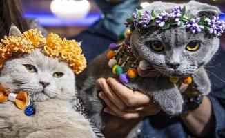 Ankara'nın En Güzel Kedisi Belli Oldu