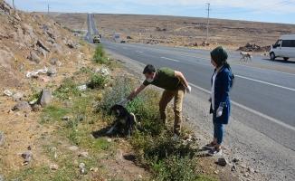 Şanlıurfa'da Tarım ve Orman İlçe Müdürlüğü 20 Köpeği Muayyene Etti