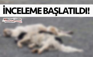 Siverek'te toplu köpek ölümü!