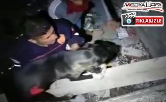 Haliliye'de çukura düşen köpeği itfaiye kurtardı