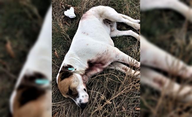 Isparta'da tüfekle köpek itlafı iddiası