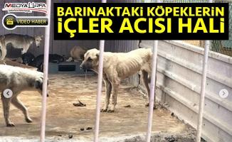 Barınaktaki hayvanların içler acısı hali!