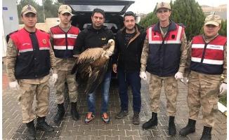Şanlıurfa'da yaralı akbabayı jandarma kurtardı