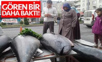 """Şanlıurfa'da """"ton balığı"""" şaşkınlığı"""