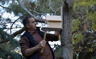 Siverek'te ağaçlara kuş evleri yapıldı!
