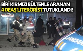 Akçakale'de yakalanan 4 DEAŞ'lı tutuklandı