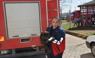 Siverek'te İtfaiye kedi ve güvercini kurtardı