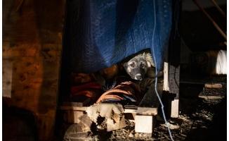 Ankara'da zehirli et verilen 13 köpek zehirlendi