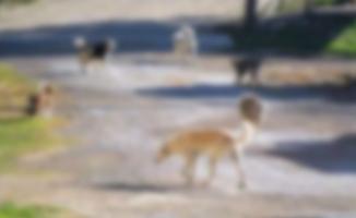 Engelli sandığı köpek yürüdü
