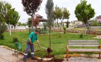 Hilvan'da ağaçlandırma çalışmaları sürüyor