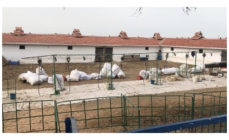 Tekirdağ'da koyun kırkan 11 işçi akıma kapıldı