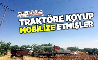 Şanlıurfa'da Kaçak Mobil Trafo Ele Geçirildi